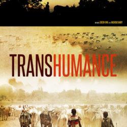 Gideon Vink : Transhumance, le sentier du berger